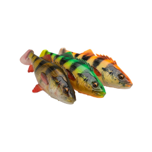 perch shad